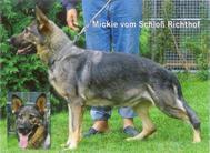 Mickie vom Schloß-Richthof