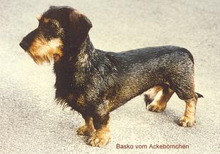 Basco vom Ackebörnchen