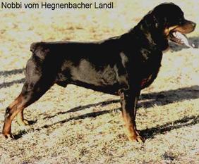 Nobbi vom Hegnenbacher Landl