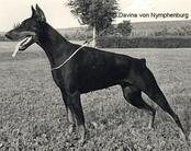 Divina von Nymphenburg