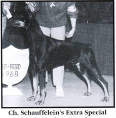 Schauffelein's Extra Special