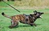 Canine For Use Darra