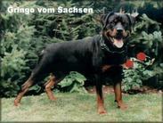 Gringo vom Sachsen