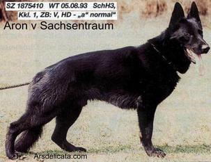 Aron vom Sachsentraum
