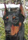 Alischa vom Hause Wolf