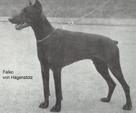 Falko von Hagenstolz