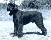Zimyrs Rommel