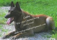 Lobo du Clos Champcheny