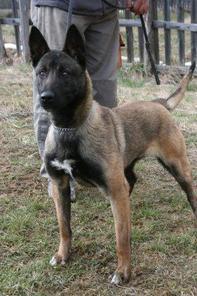 Marion NPA Detection Dog