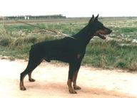 Quino de Covalta