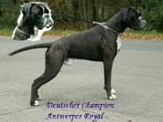 Antwerpes Royal