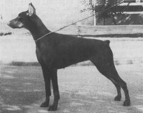 Gwendolyn van Ferrolheim