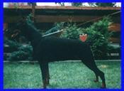 Cora vom schwarzen Jäger