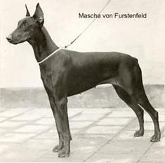 Mascha von Fürstenfeld