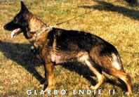 Glarbo Endie II