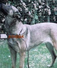 Athena LOSH 884840