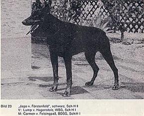 Jago von Fürstenfeld