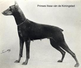 Westphalia Prinzessin Ilissa van de Koningstad