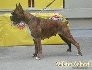 Valkyrie (UKU 003943/01)