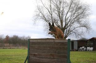 Elana vom Wolfsrudel