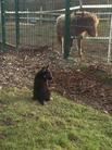 H-Wurf v. Wulfener Land + die Ponys