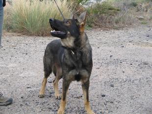 Africa Indalodog
