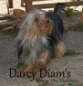 Darcy Diam's my Toffee Forever