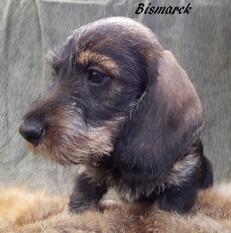 Bismarck vom alten Friedrich FCI