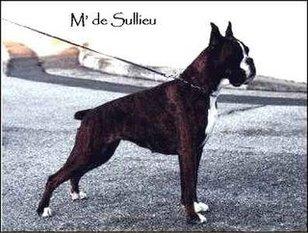 Mag de Sullieu