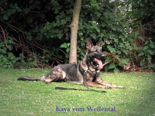 Kaya vom Wellental