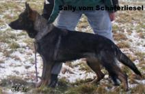 Sally vom Schäferliesel