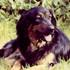 Baffy von der Asseburg