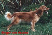 Ginger von Ascona