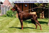 Kalina vom Norden Stamm