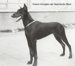 Gravin Anusjka van Neerlands Stam