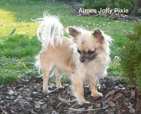 Aimee Jolly Pixie
