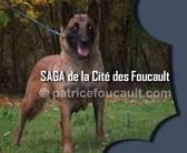 Saga de la Cité des Foucault