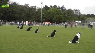 Hexgårdens Mexx