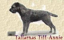 Tallarnas Tiff-Annie