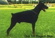 Dior for Regent Blue