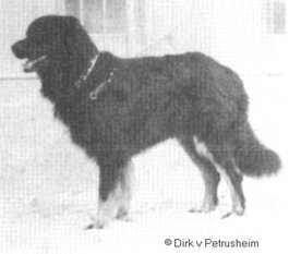 Dirk vom Petrusheim