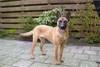 Casy NHSB 2560150 (Vermeer)
