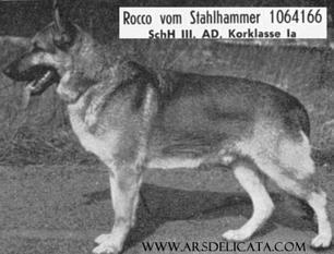 Rocco vom Stahlhammer