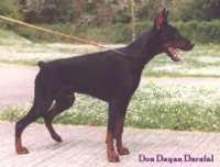 Don Dayan Darafal