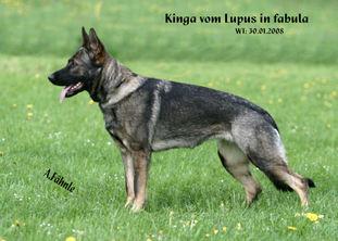 Kinga vom Lupus in fabula