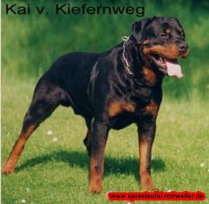 Kai vom Kiefernweg