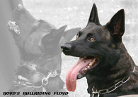 Boyd's Bullriding Floyd