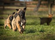O-Wurf - 5 Wochen alt
