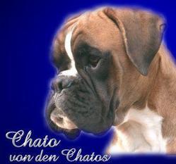 Chato von den Chatos