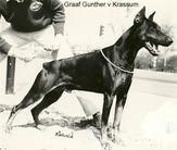 Graaf Gunther van Krassum